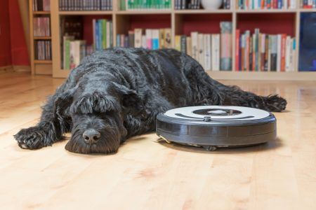 Why Dogs Are Scared of Vacuums (6 Tips to Help)