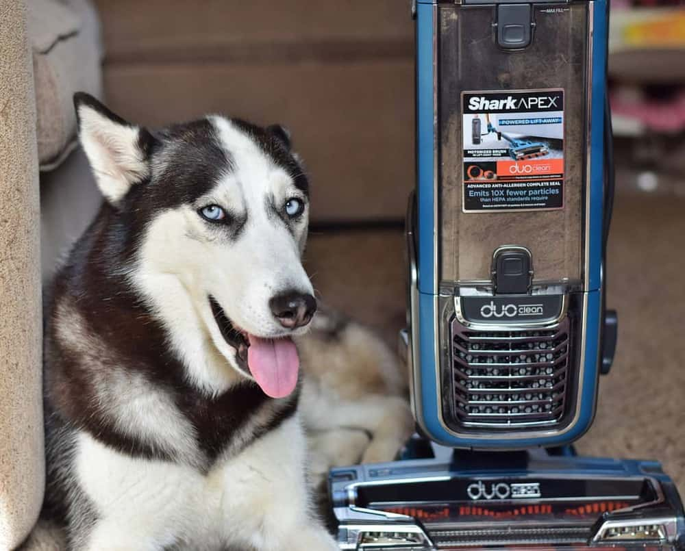 4 Best Shark Vacuums for Pet Hair (2020 Reviews)
