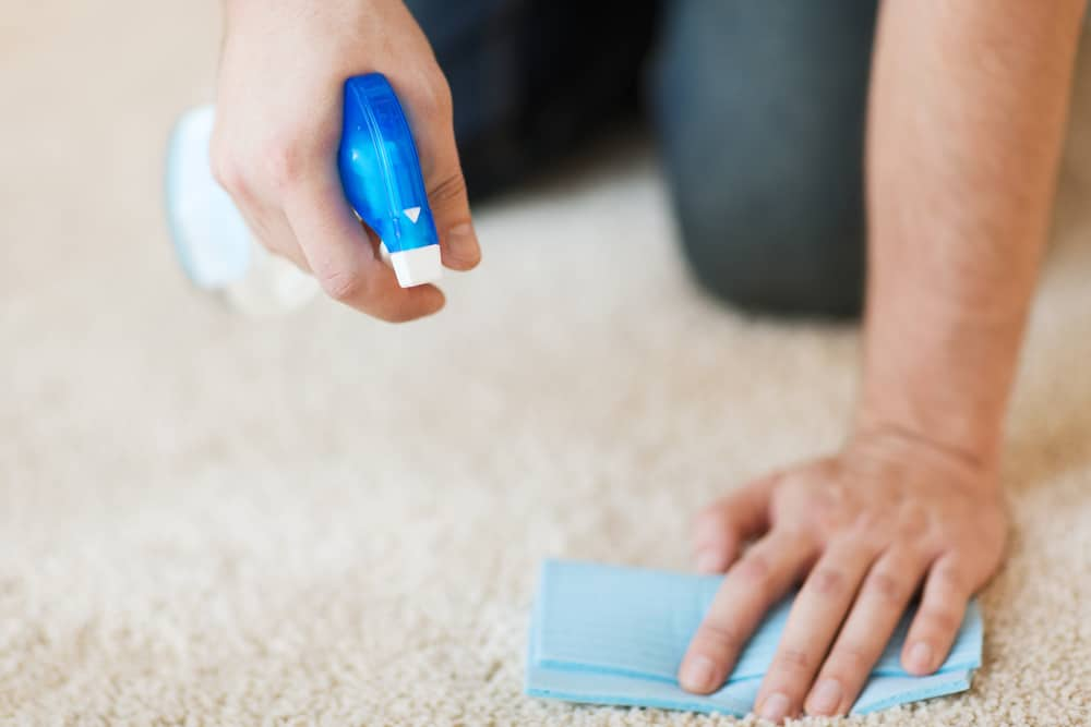 Best Carpet Cleaning Shampoos and Solutions of 2020