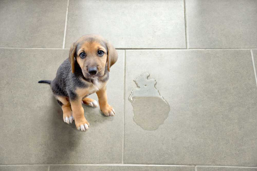 How To Clean Pet Stains On Floors Top 5 Methods Oh So Spotless