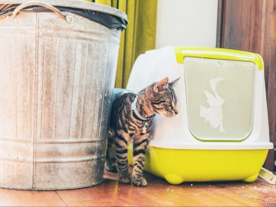 Here's the Scoop On the Best Trash Cans for Dog Poop and Cat Litter