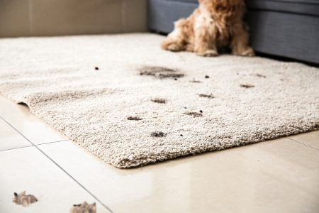 How to Clean Carpet Stains (Water-, Protein-, and Fat-Based Stains)
