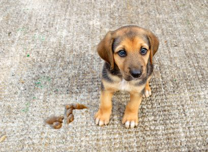How to Clean Pet Urine & Poop on Carpet (Easy Guide)