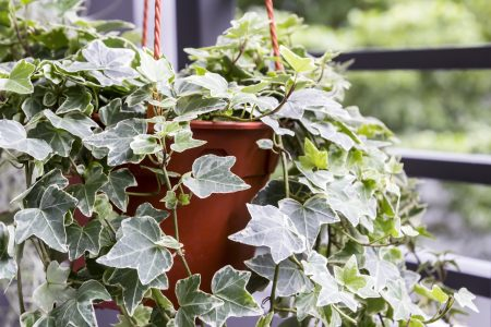 The Best Air Cleaning Plants for Your Home — According to NASA