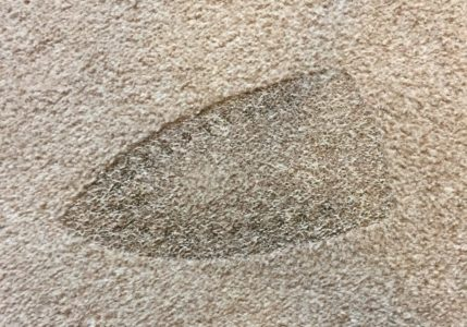 How to Get Burns out of Carpet (10 Simple Steps)